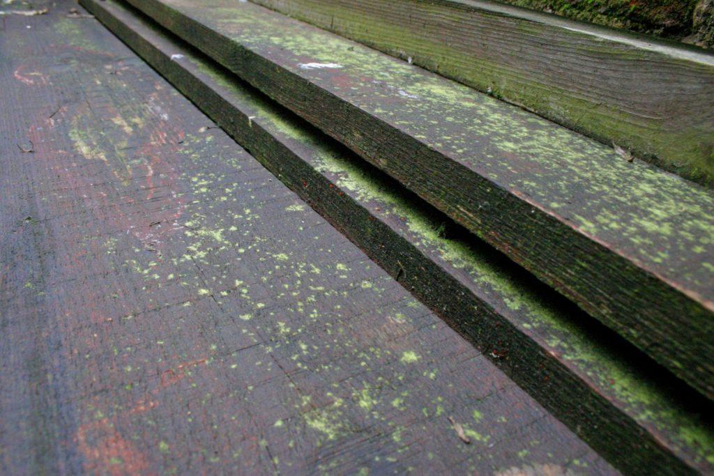 moss treatment in progress